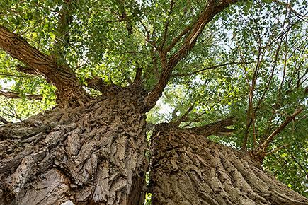 Der Baum der Wünsche in Wasserleben